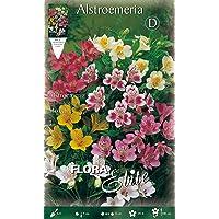 ALSTROEMERIA MIX - Lote de 3 bulbos