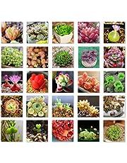 Etopfashion Plantes Succulentes Graines Mélanger Cactus Lithops Plantes Ornementales Graines Accueil Jardin Plantes