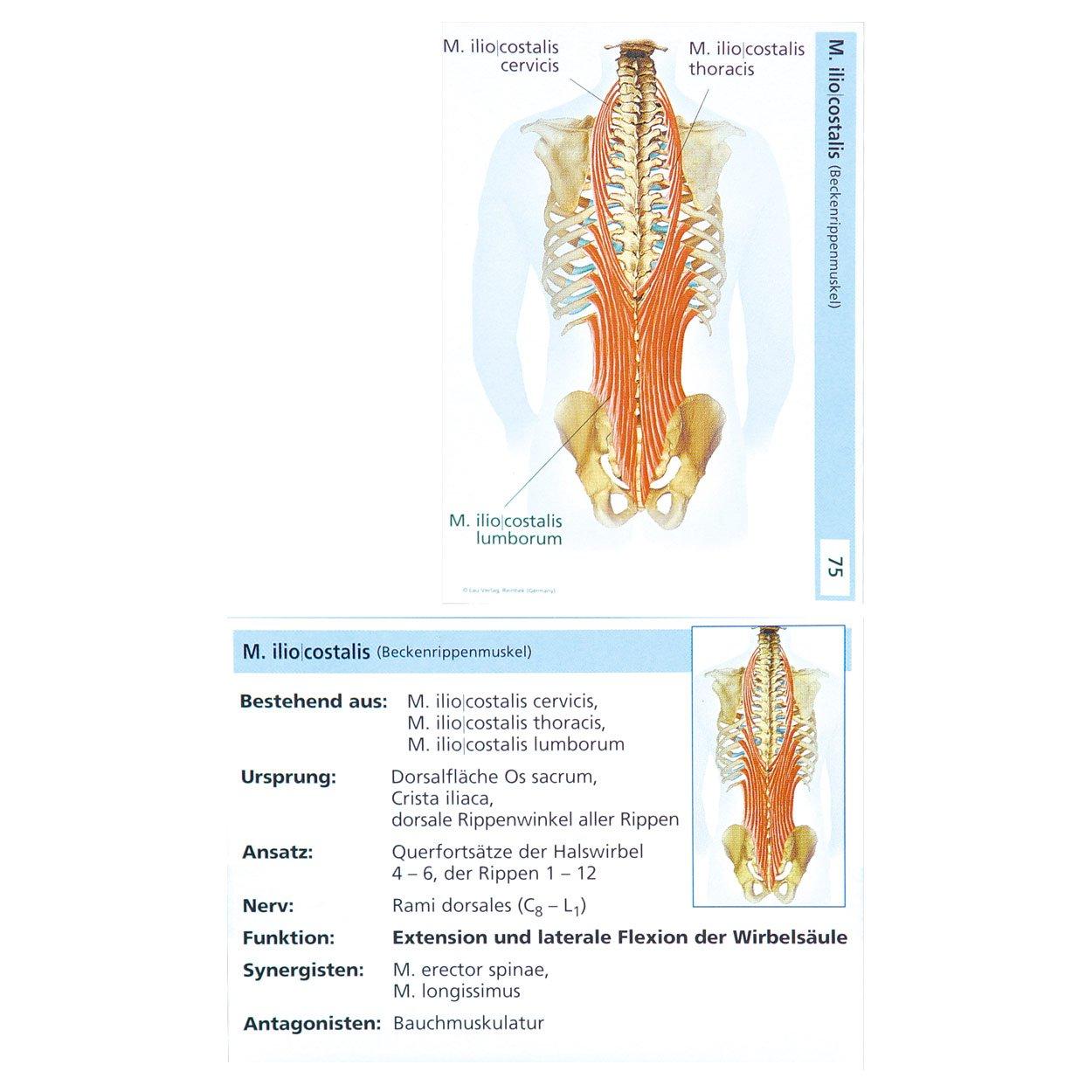 Schön Beinnerven Zeitgenössisch - Anatomie Und Physiologie Knochen ...