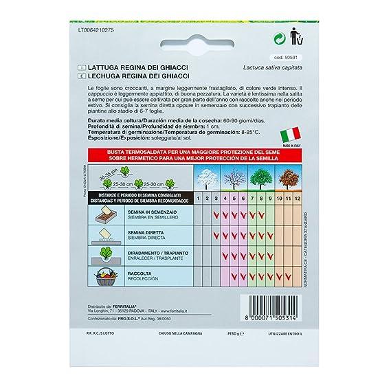 Semillas Lechuga Reina Del Hielo (7 Gramos): Amazon.es: Jardín