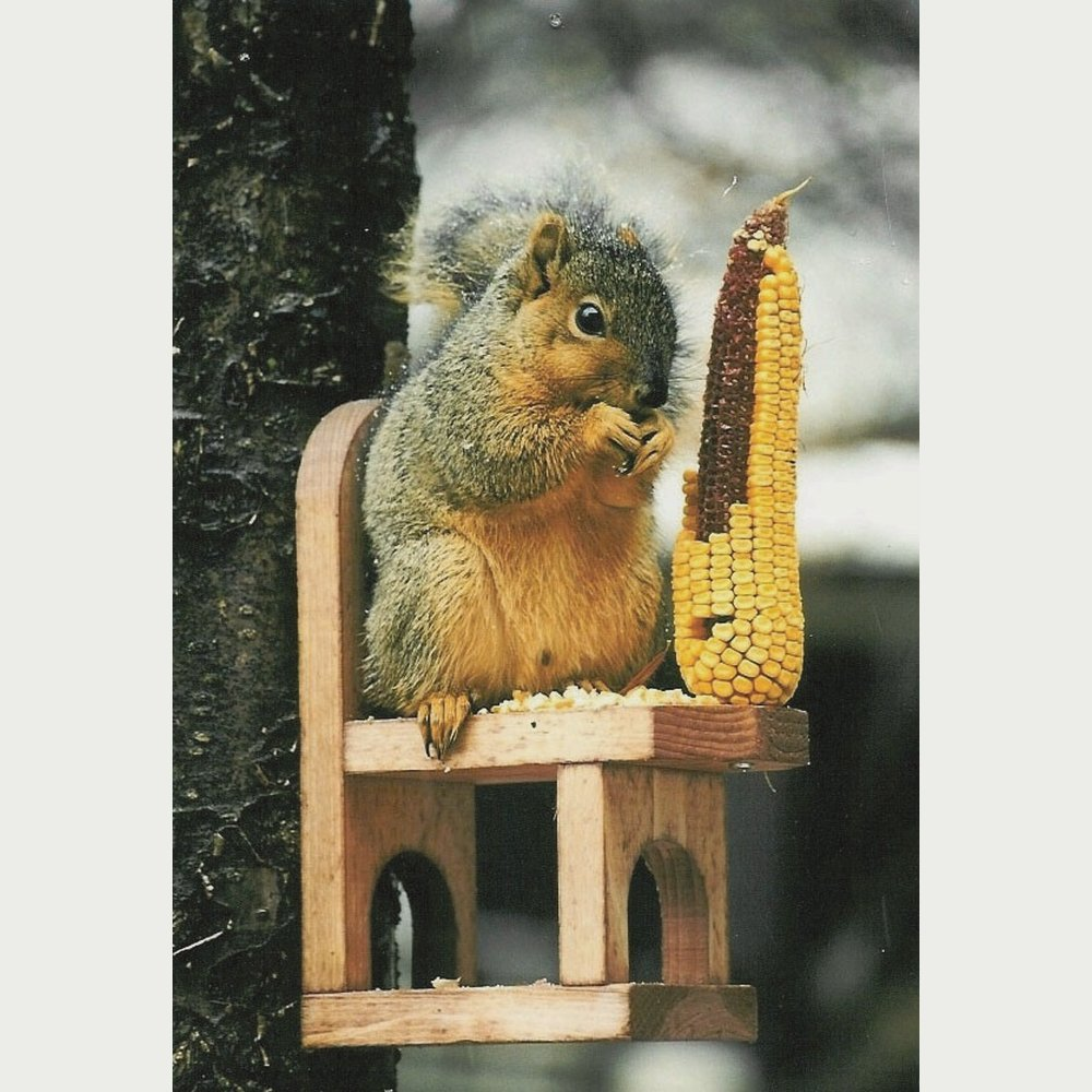 Songbird Essentials SE547 Squirrel Feeder Chair (Set of 1)