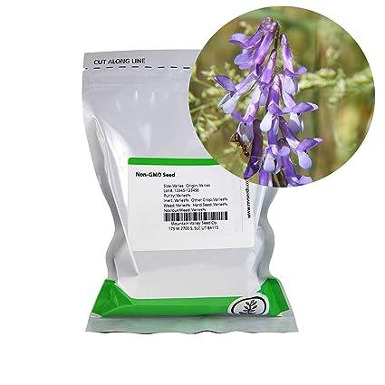 COVER CROP COMPANION PLANT TO TOMATO NITROGEN FIXER HAIRY VETCH SEEDS*BULK