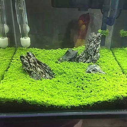 quanjucheer planta de acuario semillas pecera acuática césped agua bajo el agua Decoración Planta