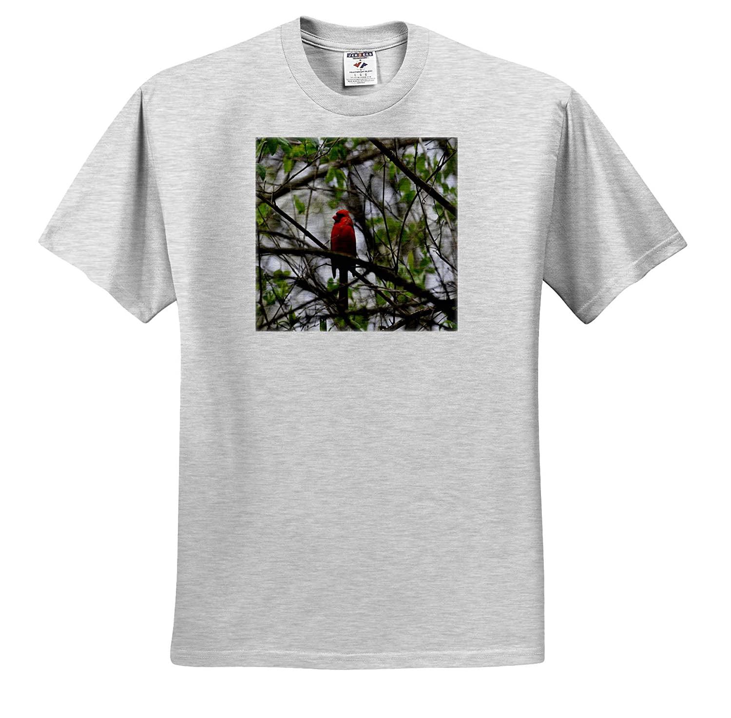 Adult T-Shirt XL 3dRose Dreamscapes by Leslie Birds ts/_314245 Cardinal Perched in a Tree