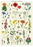 "Cavallini & Co. Wildflowers Decorative Paper Sheet 20"" x 28"""