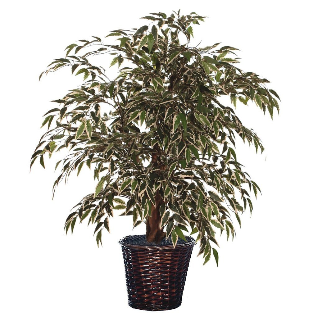 Vickerman TXX1340 Everyday Bush