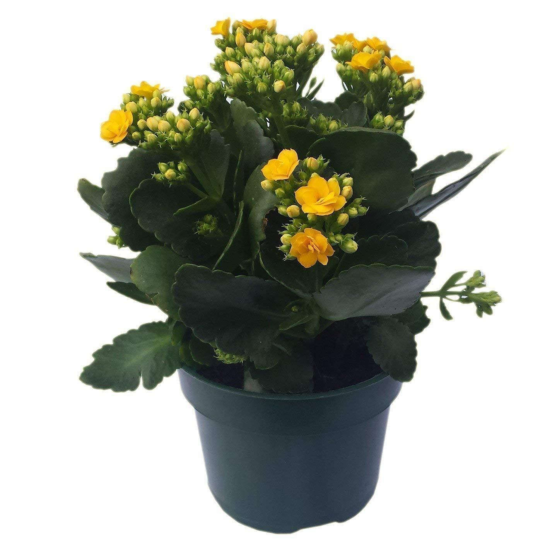 Amazon 30 Plant Pots 5 Inch Diameter 100 Recycled Plastic