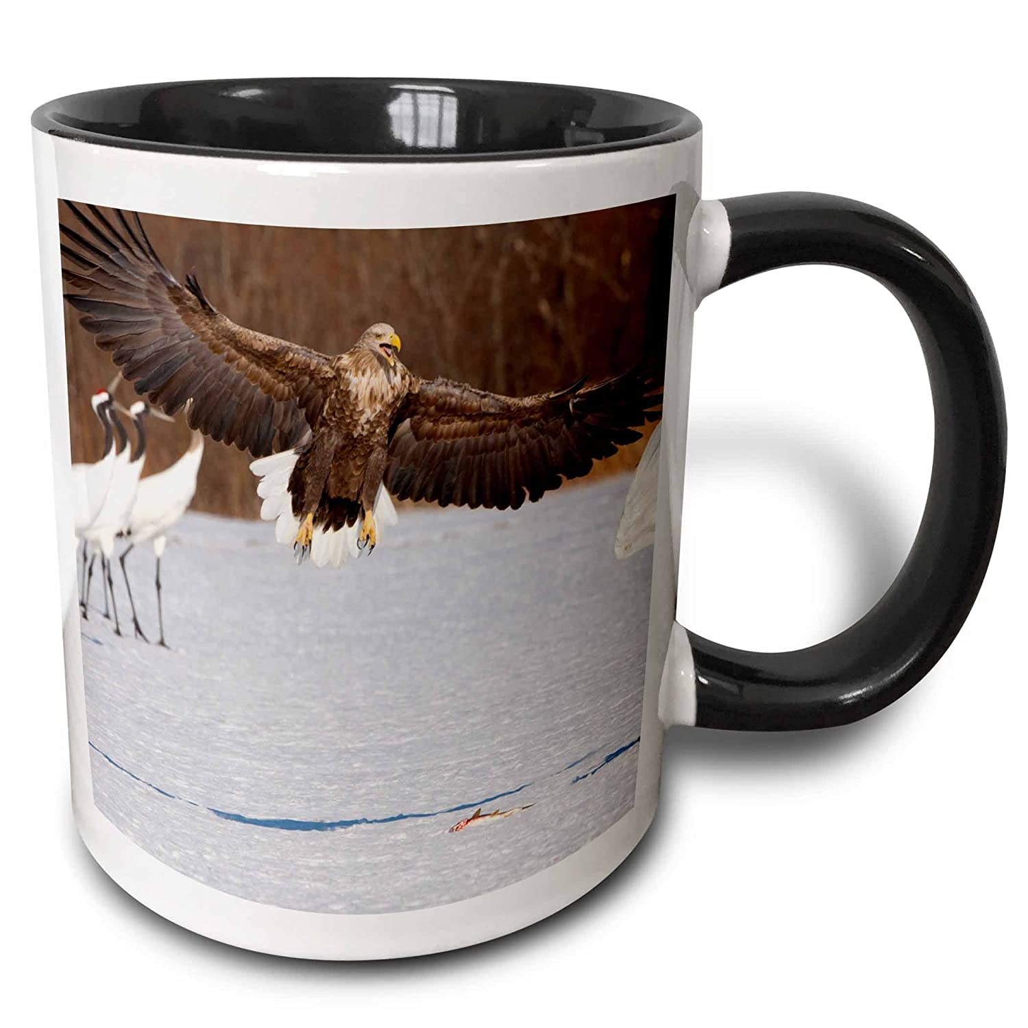 Buy 3drose 3drose Birds White Tailed Sea Eagle Japanese Crane Japan As15 Awo0007 Art Wolfe Two Tone Black Mug 11oz Mug 132723 4 Black White Online At Low Prices In India Amazon In