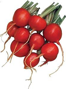 Burpee Cherry Belle Radish Seeds 1000 seeds