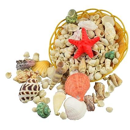 GK 1 kg de conchas de mar mixtas grandes para decoración de mesa ...