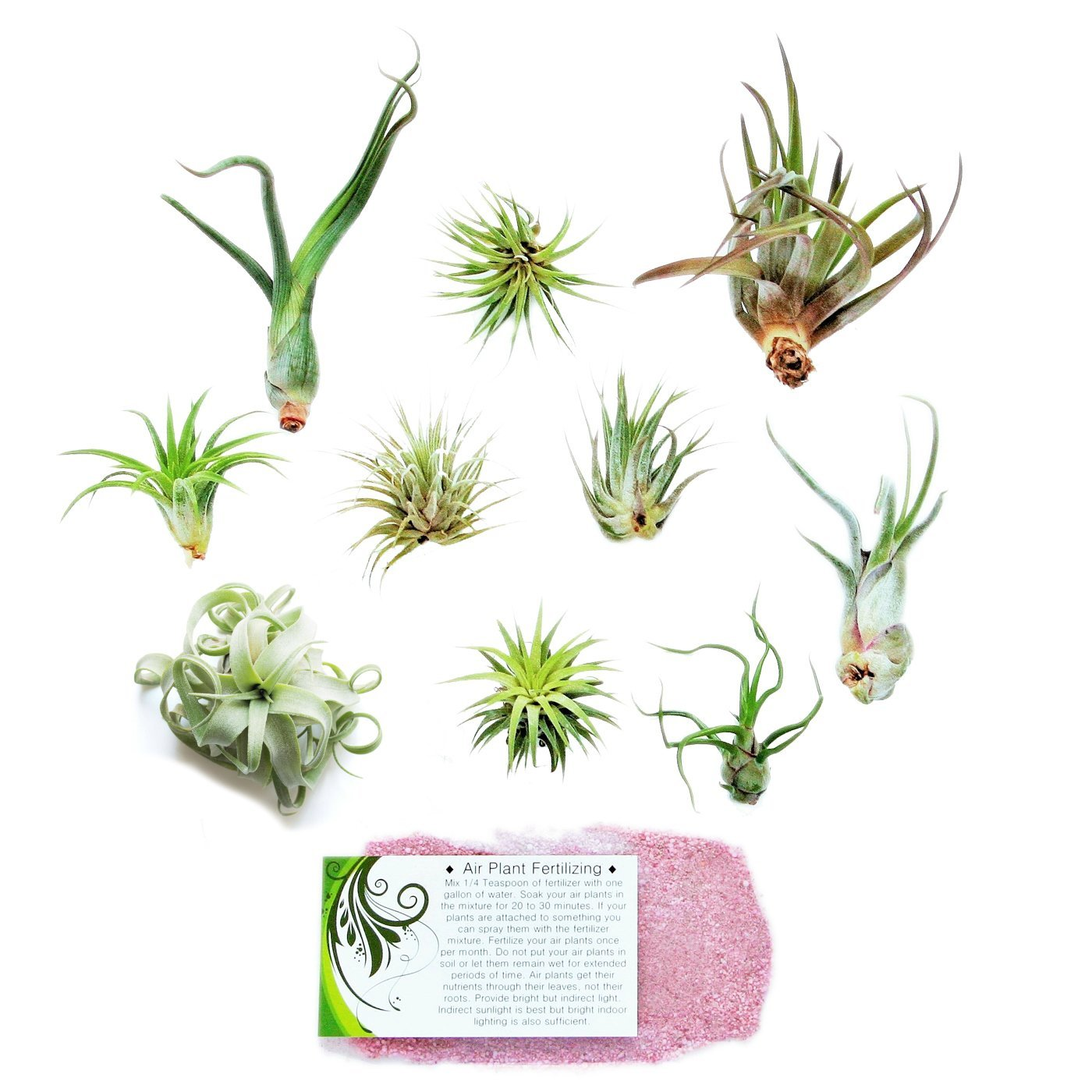 Air Plant Shop's Grab Bag of 10 Plants + Fertilizer Packet - Free PDF Air Plant Care eBook with Every Order - House Plants - Air Plant Variety - Fast Shipping from Florida by The Air Plant Shop