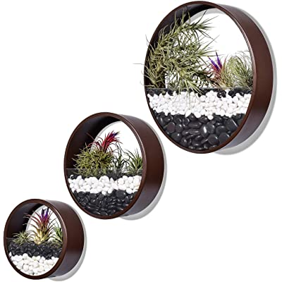Brown 3 Pcs Round Hanging Wall Vase Planter for Succulents or Herbs - Beautiful Wall Decor for Air Plants, Faux Plants, Cacti: Garden & Outdoor