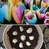 Gonikm 100pcs/ Bag Rainbow Tulip Bulbs Seeds Garden Flower Plant Flowers