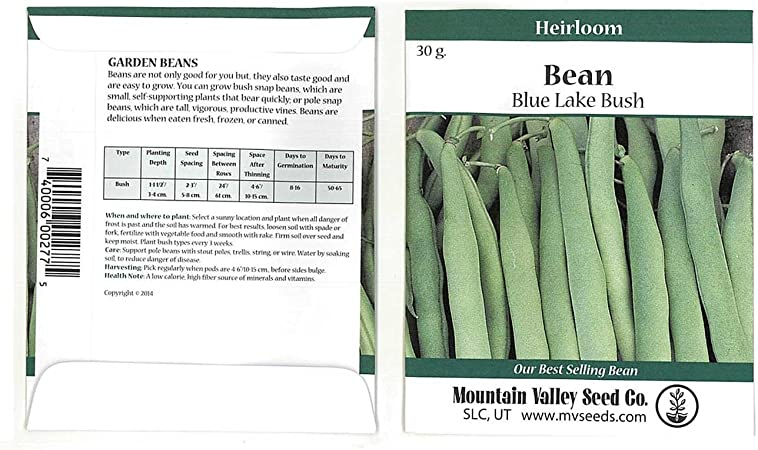 flavorful Blue Lake Bush Bean Seeds Gardening Non GMO Excellent producer