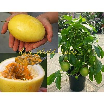VISTARIC Giant Yellow Passion Fruit! (Passiflora Edulis VAR Flavicarpa) Seeds : Garden & Outdoor