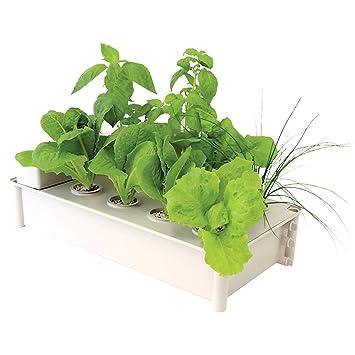 Amazoncom Hydrofarm Salad Box Hydroponic Soil Free Salad Greens