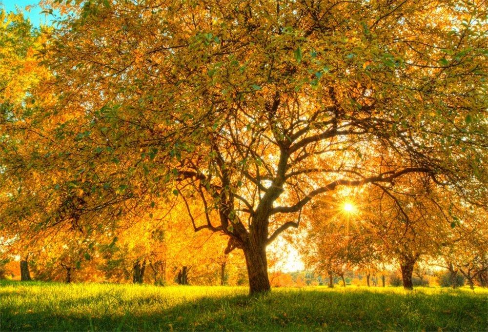 lfeey Autumn Forest Backdrops Photography秋のシーズン写真背景フォトスタジオ小道具 5x3ft NBK08755 B07F9PXCG5