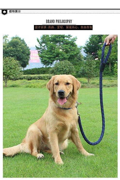 Meng pet world Correas manos libres para perros,Correas básicas ...