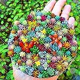 100 pcs Mini Mix Seeds Rare Succulent Seeds Flower Seeds Mini Garden Plant for Home Garden
