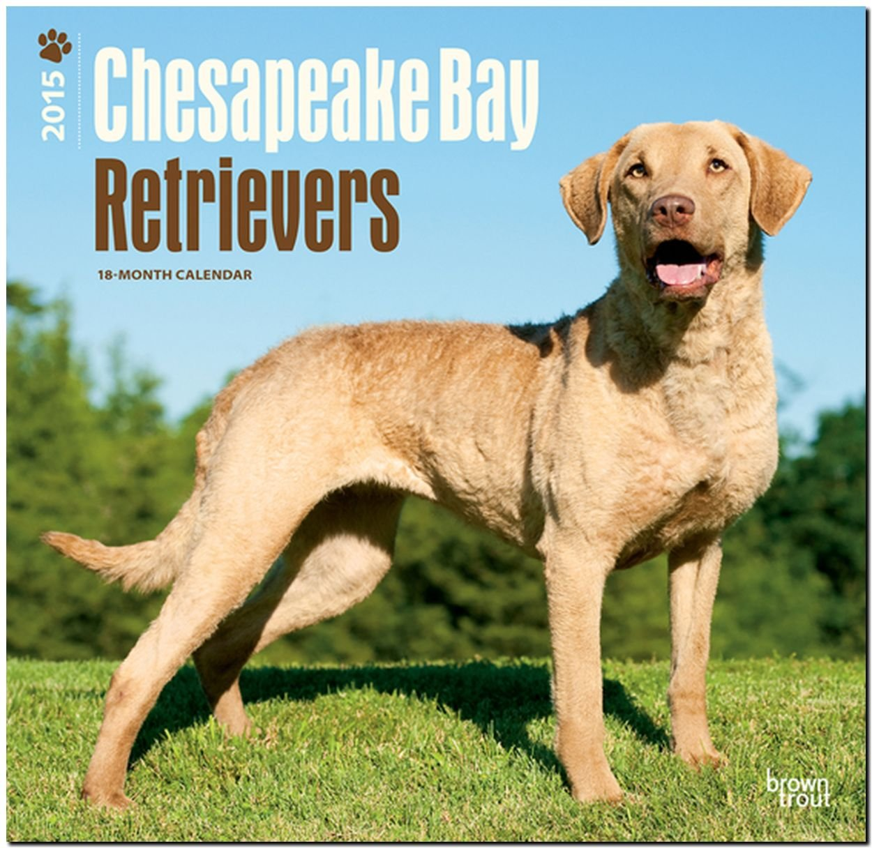 Chesapeake Bay Retrievers 2015 Square 12x12 (Multilingual Edition)