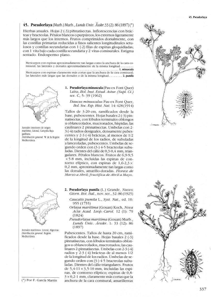 Flora Vascular de Andalucía Occidental, 3 volúmenes: Amazon ...