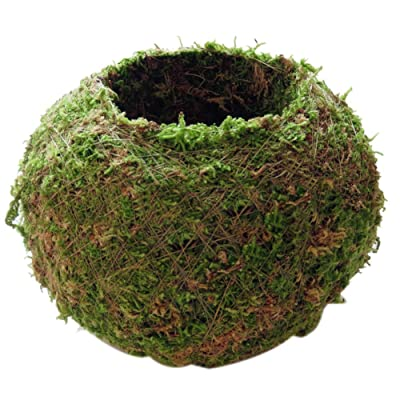 Maritown Japanese Style Moss Ball Shape Flower Vase Flower Pot Creative DIY Gardening Potted Bonsai Plants Containers Home Plant Holder: Home & Kitchen