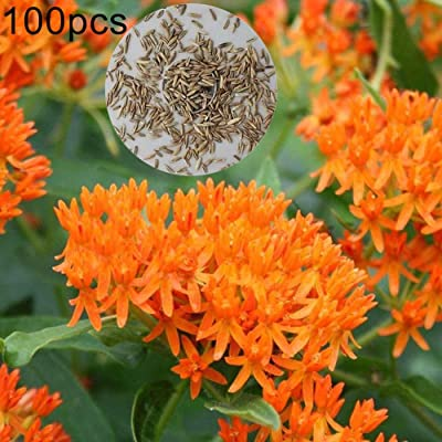 Lucky Direct Butterfly Milkweed Seeds Butterfly Milkweed Seeds Asclepias Plant Flower Garden Home Yard Decor Flower Seeds Plant Seeds Gardening Home Decor - 100Pcs Butterfly Milkweed Seeds : Garden & Outdoor