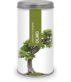 Garden Pocket - Kit de Cultivo Bonsái OLMO CHINO