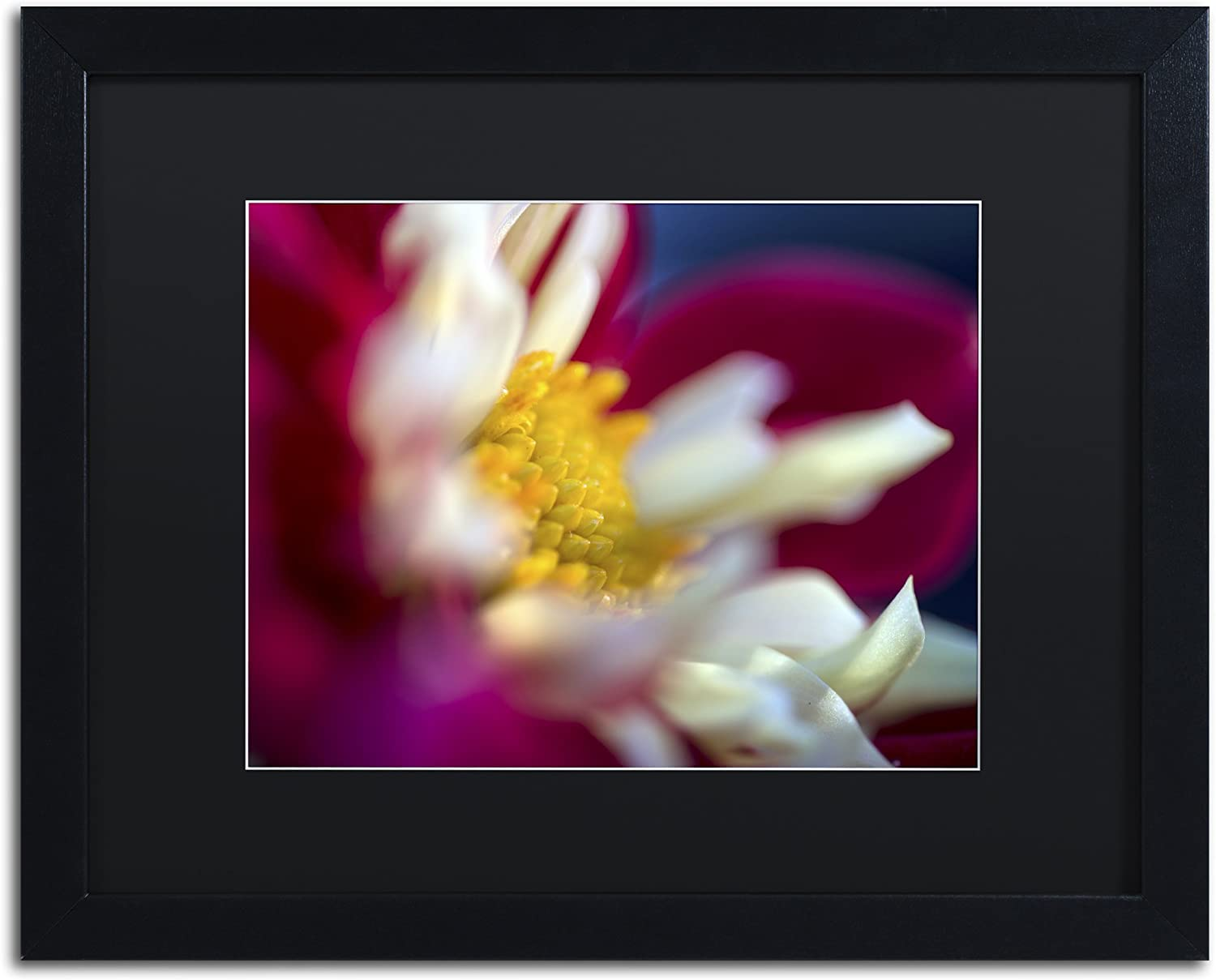 Amazon Com A Different Kind Of Dahlia By Kurt Shaffer Black Matte Black Frame 16x20 Inch Home Kitchen