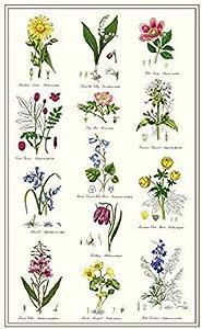 McCAW ALLAN Samuel Lamont, Botanic Garden Kitchen/Tea Towel, 100 Percent Cotton, Imported from UK