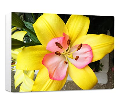 Amazon Yellow Flower Style 1 Streched Canvas Wrap Frame Print