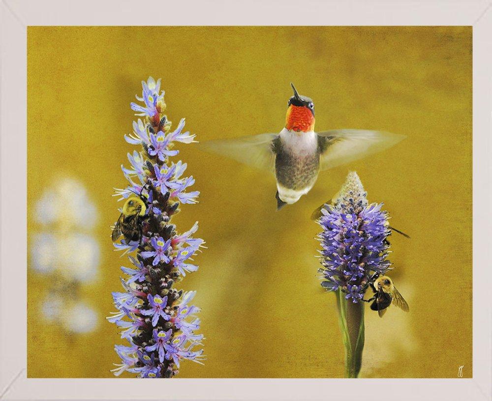 10.75x13.25 Frame USA Breakfast The Bees Hummingbird-JAIJOH139695 10.75x13.25 Jai Johnson in a Affordable Brazilian Walnut Medium Print