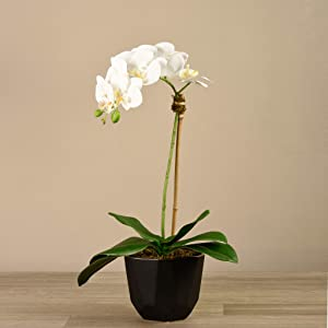 "BLOOMR Artificial Black Potted Orchid Arrangement, Trendy Luxury Silk Fabric Decorative Indoor Faux Orchid Arrangement, 24"" tall, 3.3 lbs, Vase 5.12"""