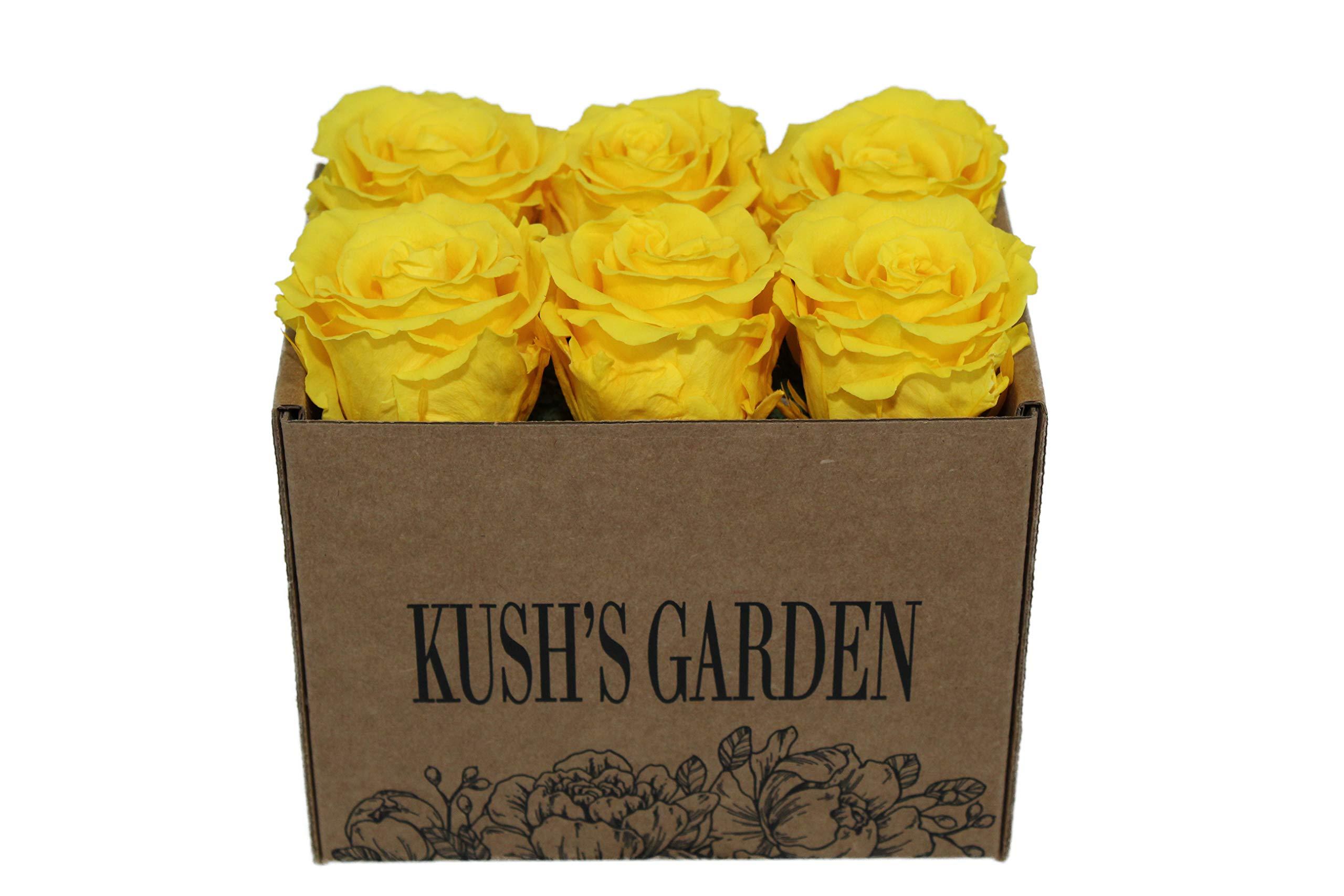KUSHS GARDEN Real Preserved Roses in Box (Sunshine Yellow)