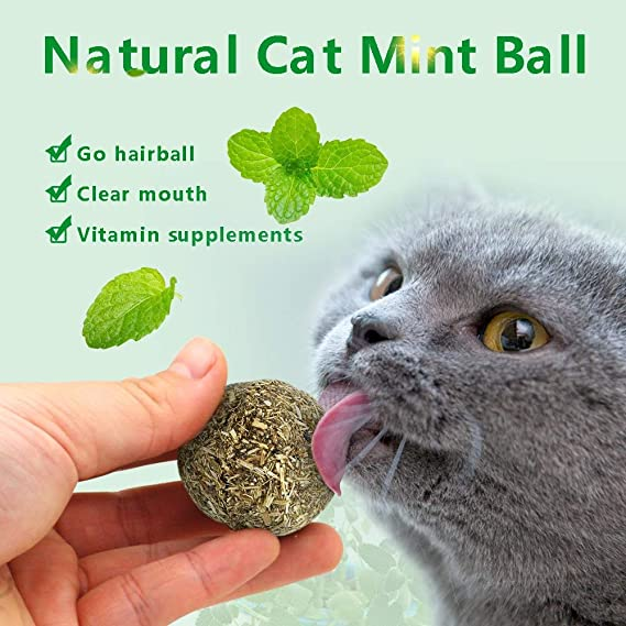 Amazon.com : Best Quality Funny cat Catnip Toy Cats Favor Plush Stuffed Mint Fish Mouse Ball Toys Small pet Interactive Teaser Wand Kitten Scratch Board ...
