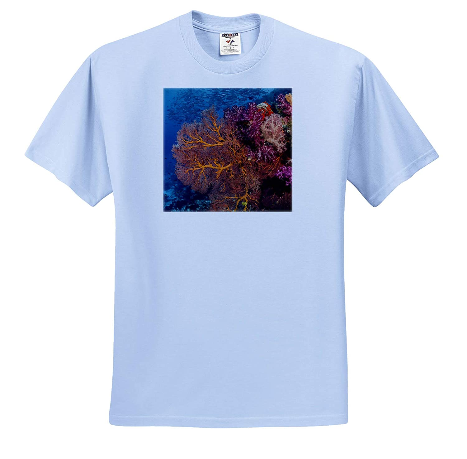 Underwater 3dRose Danita Delimont Fiji ts/_314013 - Adult T-Shirt XL Fish and Coral Reef