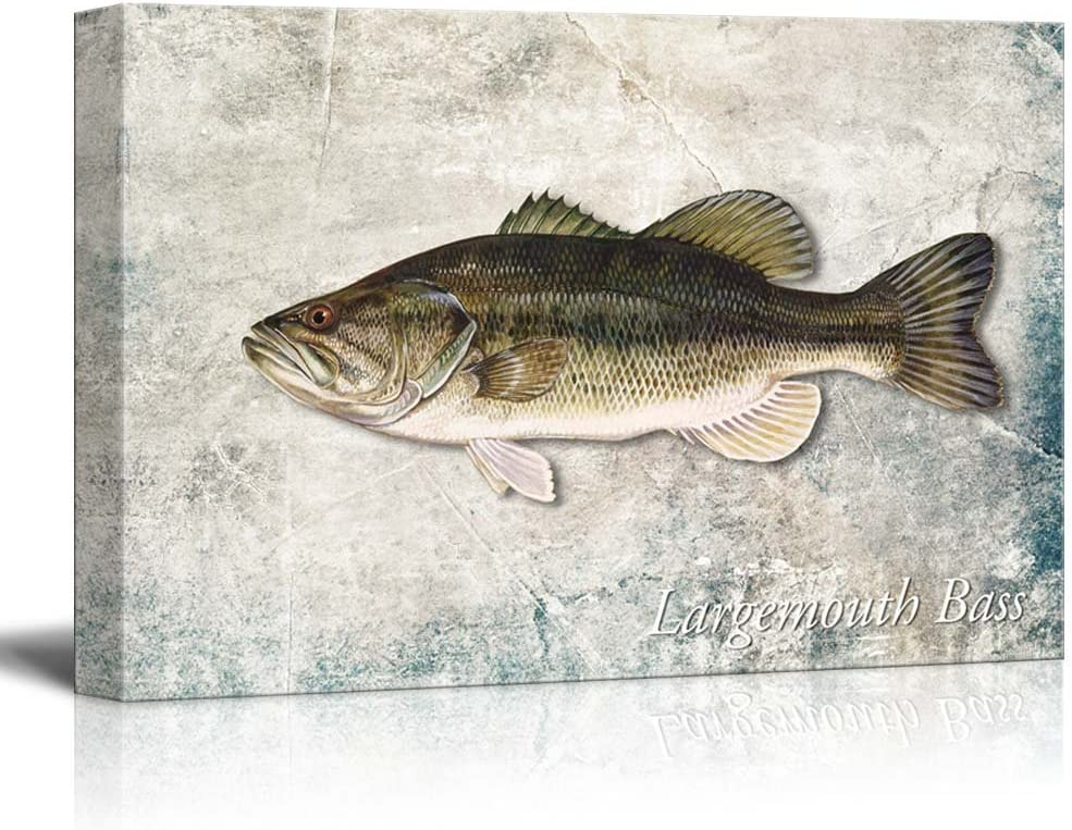 wall26 - Green Largemouth Bass Fish Illustration on a Textured Background - Canvas Art Home Art - 24x36 inches