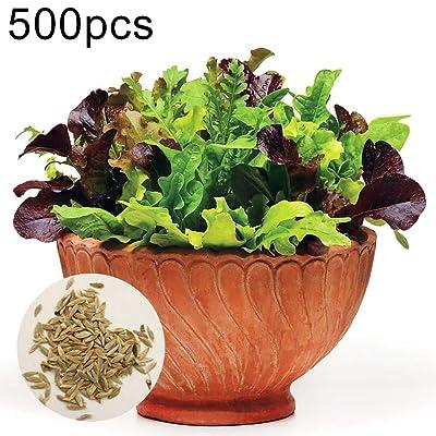 Mggsndi 500Pcs Colorful Lettuce Seeds Vegetable Seed Non-GMO Easy Grow for Garden Farm Bonsai Lettuce Seeds : Garden & Outdoor