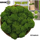 Moss Preserved Green/Chartreuse Moss for Fairy Gardens, Terrariums, Any Craft or Floral Project or Wedding Other Arts (Green 8.8oz)