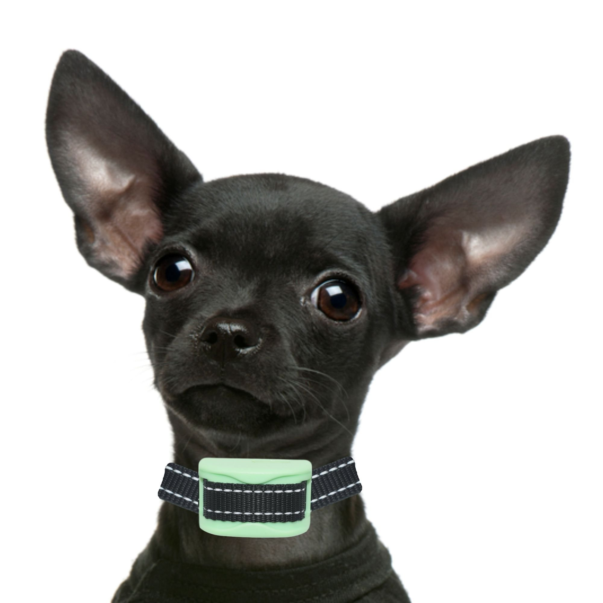 Bark Collar Small Dog - RECHARGEABLE PAIN FREE XS - Small - Beep & Vibration