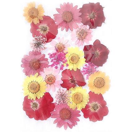 Amazon Com Alacos Hand Made Pressed Flowers For Face Body Makeup