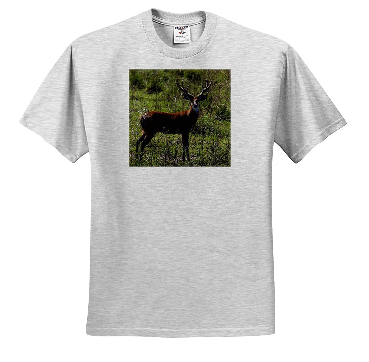 - Adult T-Shirt XL ts/_314330 Brazil 3dRose Danita Delimont A Male Marsh Deer in The Pantanal Deer