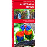 Australian Birds: A Folding Pocket Guide to Familiar Species (A Pocket Naturalist Guide)