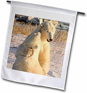 3dRose fl_70250_1 Canada, Manitoba, Hudson Bay, Churchill, Polar Bears-CN03 BJA0044-Janyes Gallery Garden Flag, 12 by 18-Inch