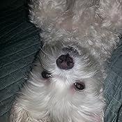Amazon.com : Zuke's Natural Training Dog Treats; Mini