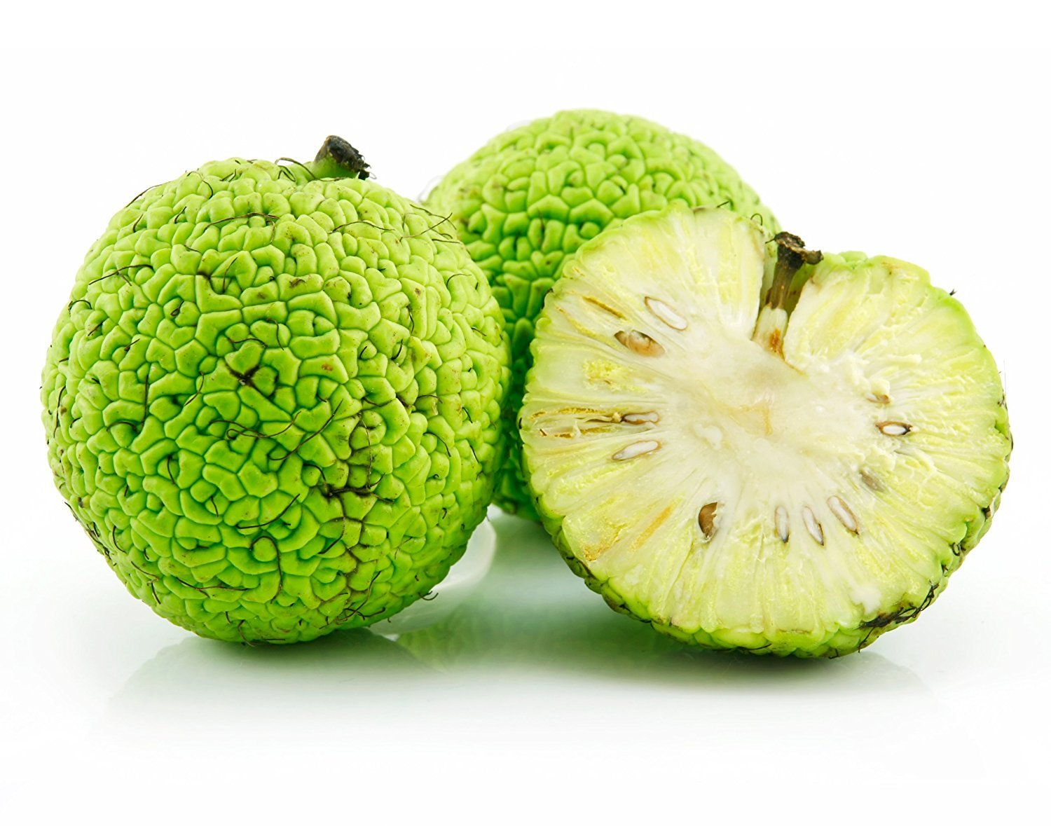 10 Osage Oranges, Hedge Apples - Natural Insect and Spider Repellent by Simply Better