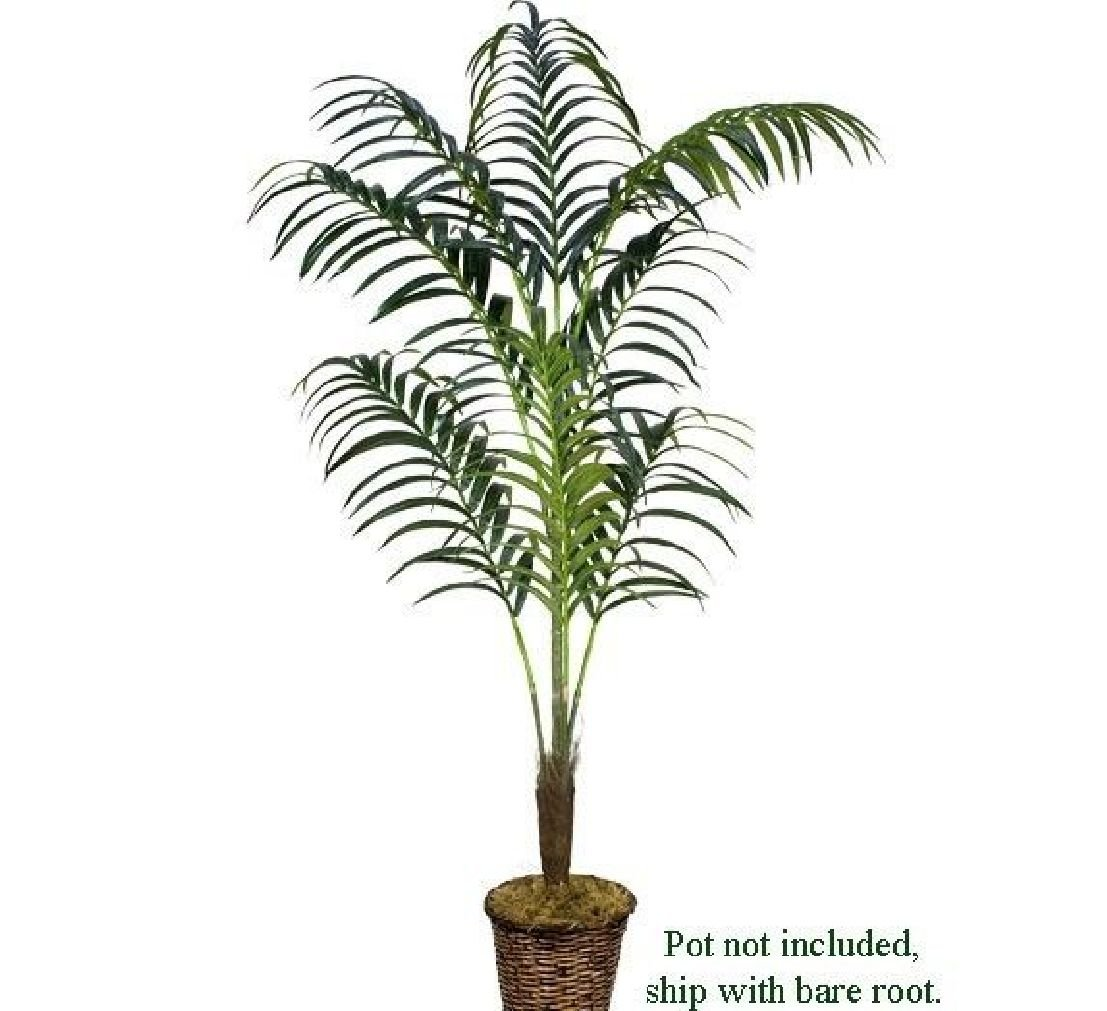 8' Kentia Palm Artificial Trees Silk Plant 667 by Black Decor Home (Image #1)