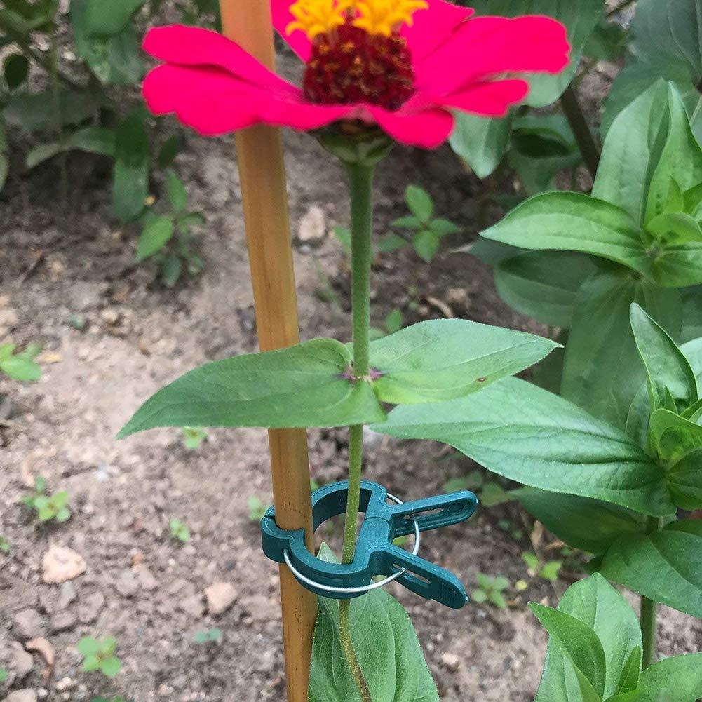 Xiton 20 St/ück Pflanzen St/ütze Befestigungs Clips Tomaten Clips Kunststoff-Clips Unterst/ützung f/ür die Unterst/ützung oder Geradlinigkeit von Pflanzen St/ängeln Reben