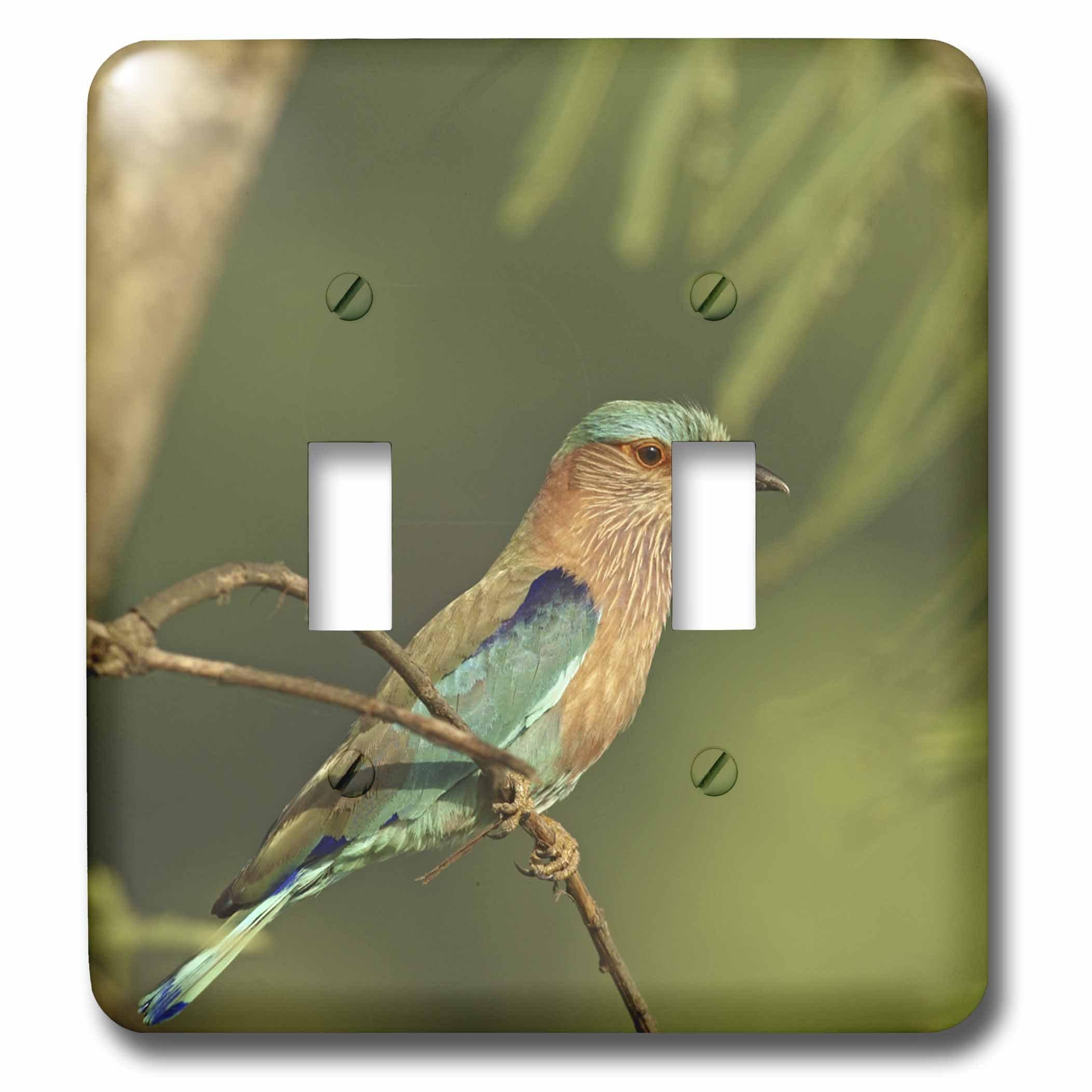 3dRose lsp_70543_2 Indian Roller Bird, Corbett Np, Uttaranchal, India-As10 Jra0089 Jagdeep Rajput Double Toggle Switch