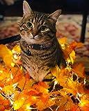 BoomBone Thanksgiving Cat Collar Breakaway with